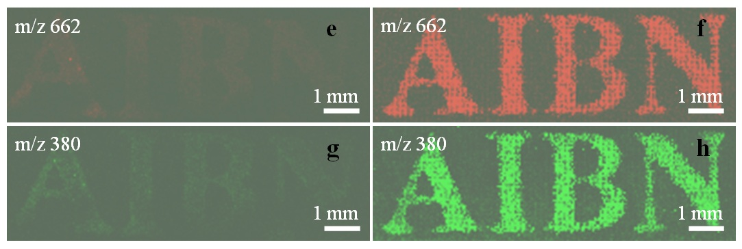 Imaging of stamped invisible micro-patterns of trace amount molecules.